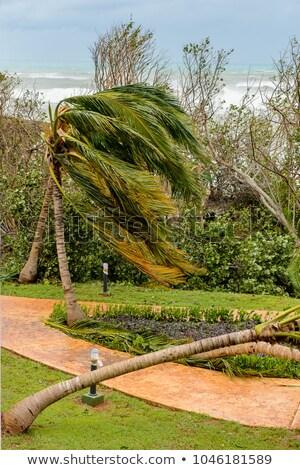 Palmera arena agua árbol madera paisaje Foto stock © moses