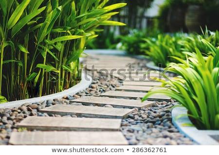 Alley in tropical garden. Stock photo © Kurhan