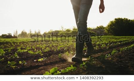 農民 フィート 自然 靴 緑 工場 ストックフォト © aetb