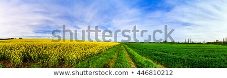 campo · cielo · nubes · flor · primavera · sol - foto stock © elenarts