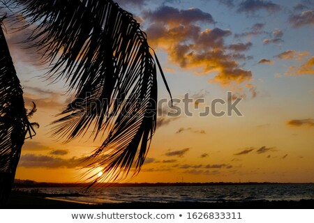 cloudy sky backlight with palm tree Stock photo © lunamarina