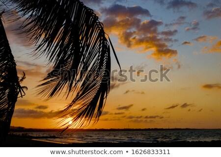 cloudy sky backlight with palm tree stock photo © lunamarina