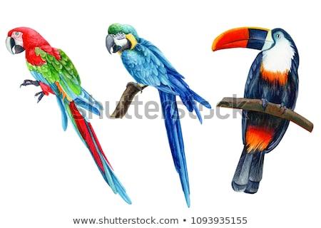 tropical ara Stock photo © tiero