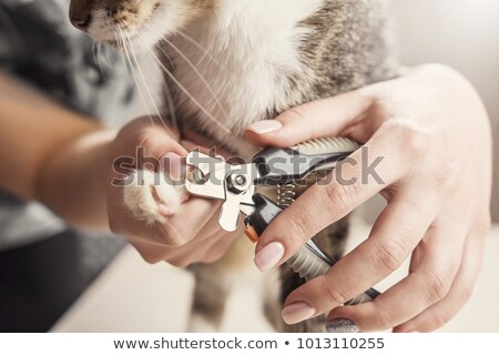 Hands and nail clipper Stock photo © serendipitymemories
