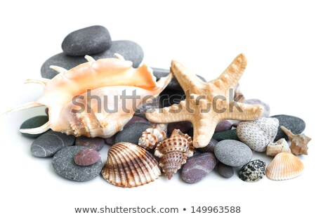 Small Heap Of Sea Stones And Beige Cockleshell Foto d'archivio © Es75