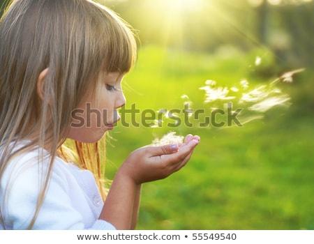 Blond kid girl blowing dandelion flower in green meadow Stock photo © lunamarina
