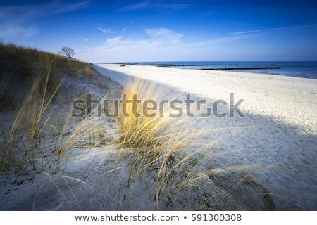 Gyönyörű tájkép Balti-tenger ősz tél fű Stock fotó © juniart