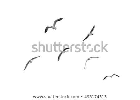 Foto stock: Voador · gaivotas · oceano · céu · nuvens · pássaro