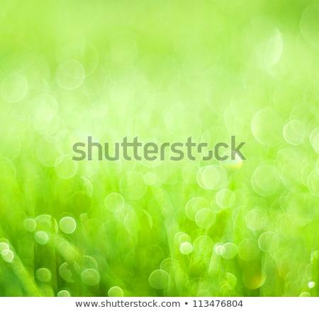 résumé · bouton · floral · design · fond · amis - photo stock © creator76