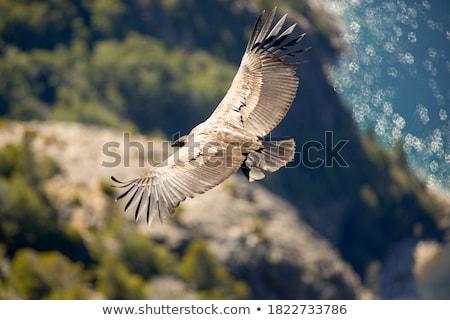 Permanente rotsen outdoor vogel natuur Stockfoto © rhamm