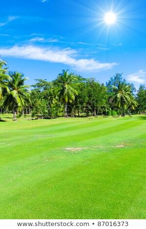 подробность гольф трава гольф природы Сток-фото © CaptureLight