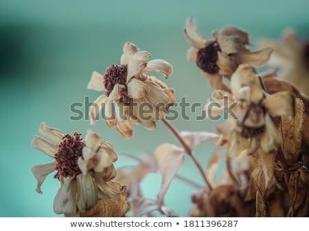 Virágok klasszikus kert természet park virág Stock fotó © sweetcrisis