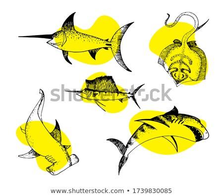decorativo · branco · tubarão · mar · peixe · água - foto stock © ulyankin
