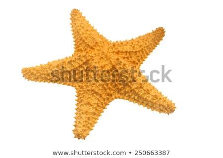 Stock fotó: Citromsárga · tengeri · csillag · izolált · fehér · háttér · óceán