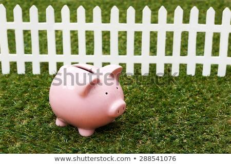 Piggy Bank трава белый забор банка экономики Сток-фото © HighwayStarz