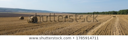 hay bale rolls in field stock photo © stevanovicigor