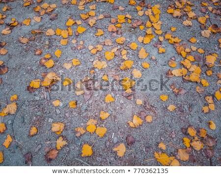 őszi levelek járda narancs természet utca piros Stock fotó © Taigi