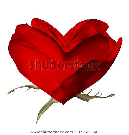 stylish red rose isolated on white eps 10 stock photo © beholdereye