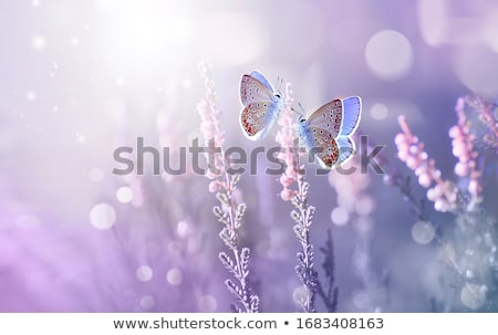 Colourful fresh flowers Stock photo © bluering