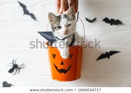 Evil bat sitting on the hand Stock photo © studiostoks