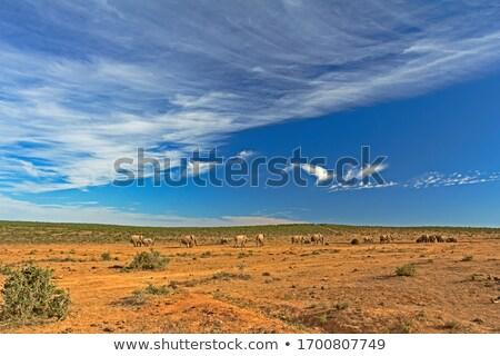Felhős kék pici test víz Dél-Afrika Stock fotó © markdescande