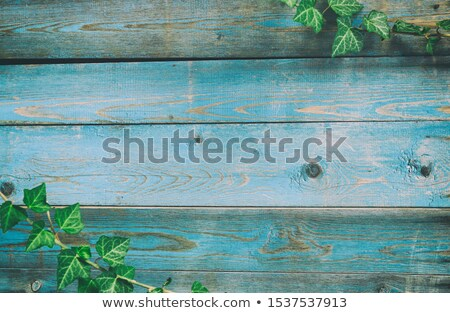 wooden fence and flowers stock photo © bluering