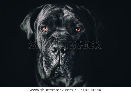 aranyos · kutyakölyök · sétapálca · fehér · fotó · stúdió - stock fotó © vauvau
