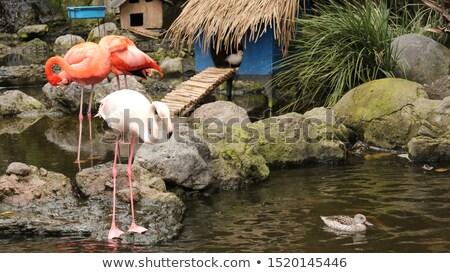 異なる 野生動物 一緒に 実例 自然 背景 ストックフォト © bluering