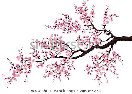 日本語 · 桜 · ツリー · 小枝 · 咲く - ストックフォト © taviphoto