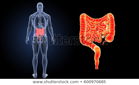 Colon intestino dolore illustrazione digerente Foto d'archivio © Lightsource
