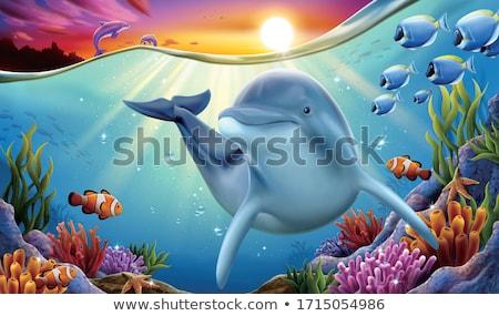 дельфин океана иллюстрация улыбка счастливым морем Сток-фото © adrenalina