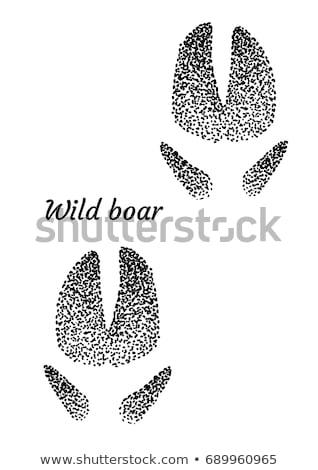 Wild boar detail Stock photo © andreasberheide