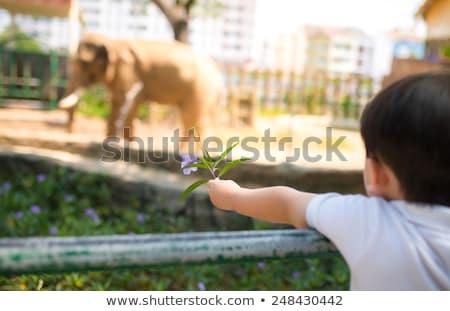 Due elefanti ragazzi zoo illustrazione bambino Foto d'archivio © bluering