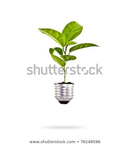globale · gloeilamp · bladeren · eenvoudige · icon · boom - stockfoto © adamson