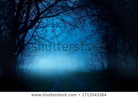 A forest at dark night Stock photo © bluering