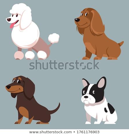 desenho · animado · poodle · falante · retro · desenho · bonitinho - foto stock © cthoman