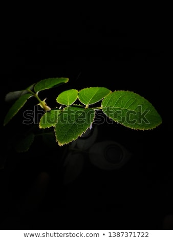 Wild animals on green leave frame Stock photo © bluering