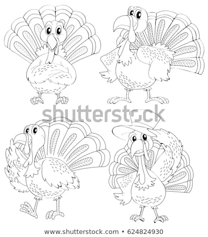 Doodle animal outline of turkey in four actions Stock photo © colematt