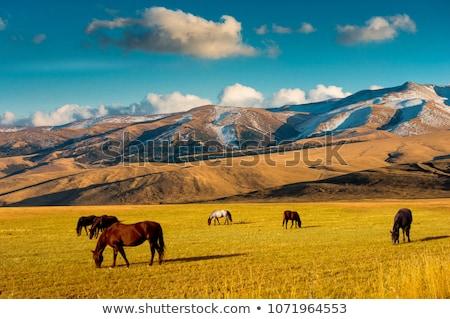 Paard bergen grijs najaar landschap Stockfoto © Kotenko