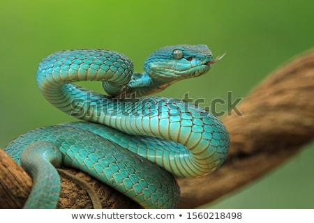 Kígyó dzsungel illusztráció erdő természet terv Stock fotó © bluering
