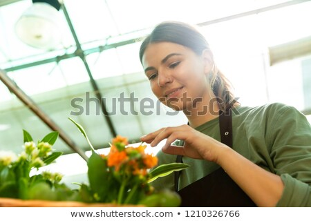 Image of beautiful woman gardener 20s wearing apron touching flo Stock photo © deandrobot