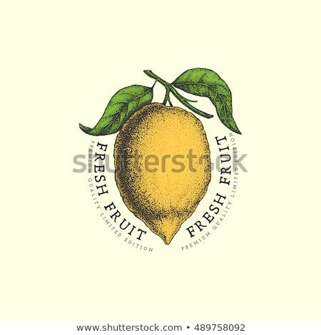 Color vintage fruit emblems Stock photo © netkov1
