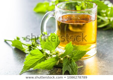 A cup of white dead-nettle tea with fresh dead-nettles Stock photo © madeleine_steinbach