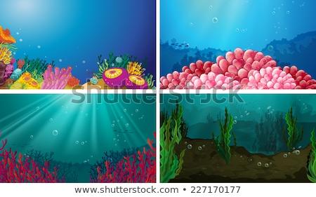 Szett vízalatti jelenet illusztráció terv háttér Stock fotó © bluering