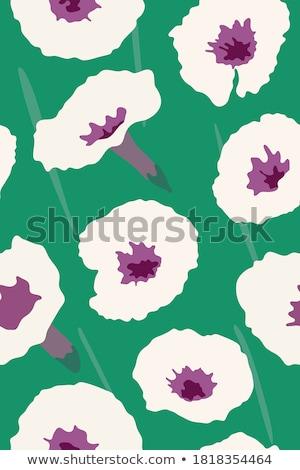 Manhã glória flor ilustração papel Foto stock © colematt