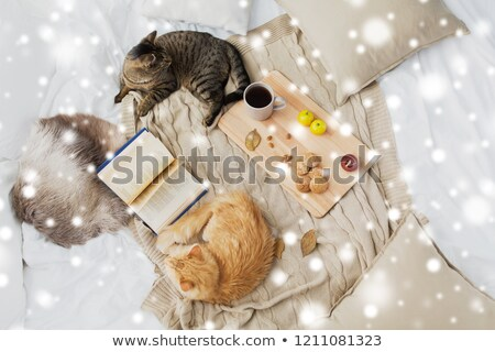 two cats lying on bed at home in winter over snow Stock photo © dolgachov
