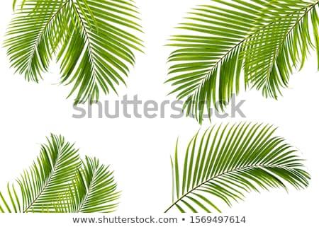 Kókuszdió pálmalevél szett kézzel rajzolt fehér tengerpart Stock fotó © Artspace