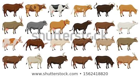 Tehén sétál mező gazdálkodás állat szarvasmarha Stock fotó © robuart