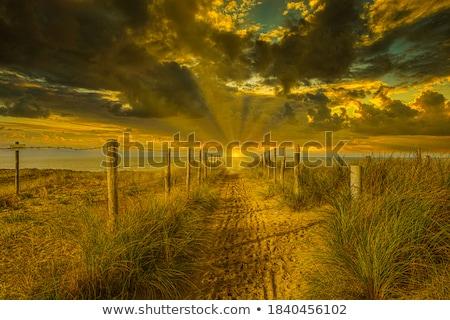 dune grasses in sun stock photo © jsnover