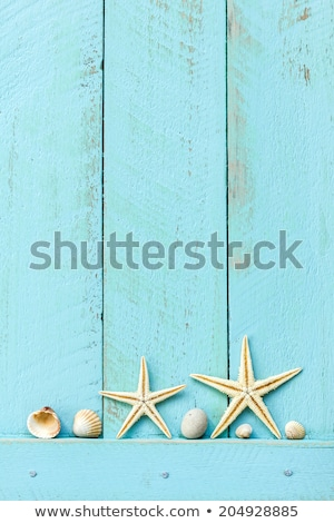 Sea Shells Abstract Background on Weathered Wood Stock photo © marilyna